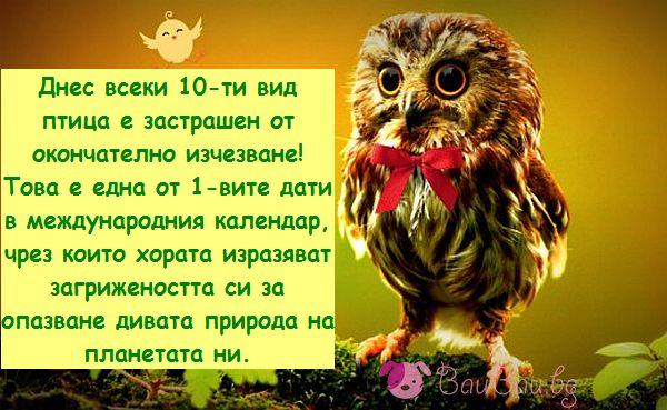 1 Април - Международен ден на птиците