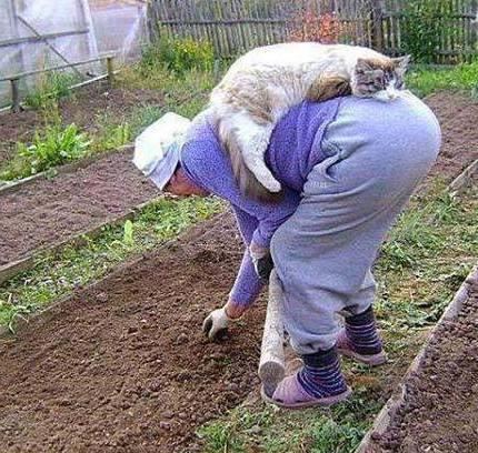 КоткоДиск