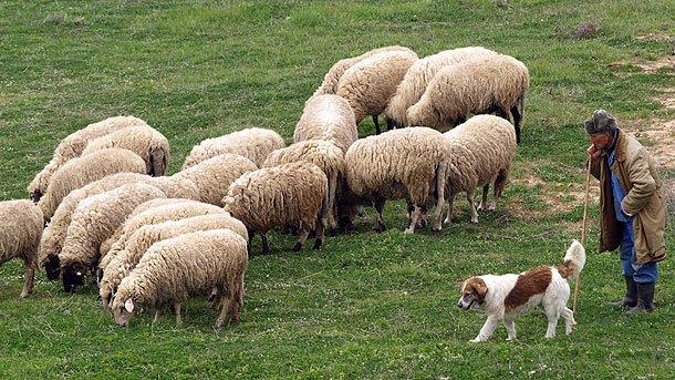14 Октомври - Празник на овчарите
