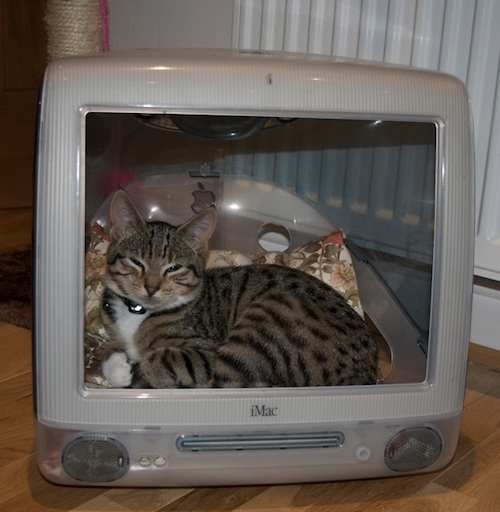 Котешки релакс, 3495 епизод