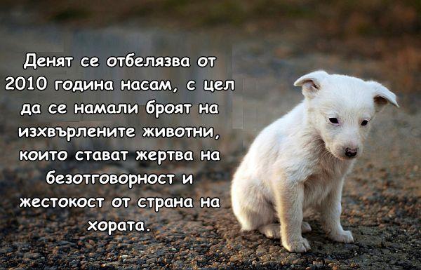 4 Април - Ден на безстопанствените животни
