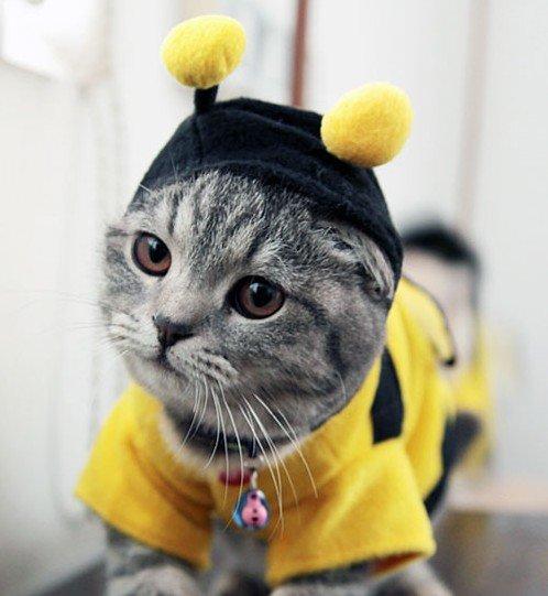 Котешка пчеличка