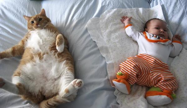Две сладки пухкави създания