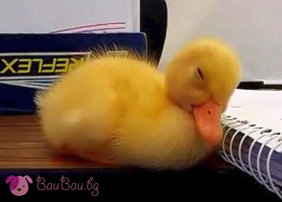 Сладко патенце заспива