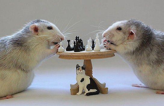 Шах ... и Мат