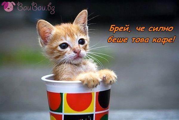 Да изпием по едно силно сутрешно кафе!