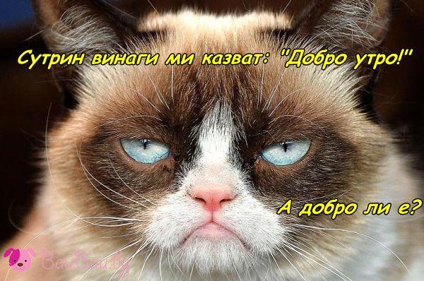Гръмпи Кет Утро :)