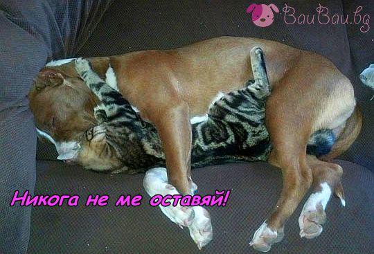 Една любов между котка и питбул