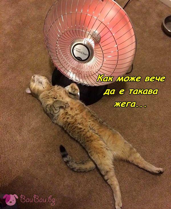 Ранни жеги