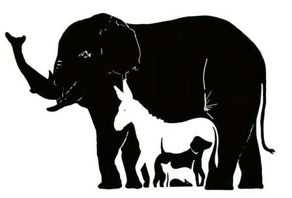 Колко животни виждате на снимката?