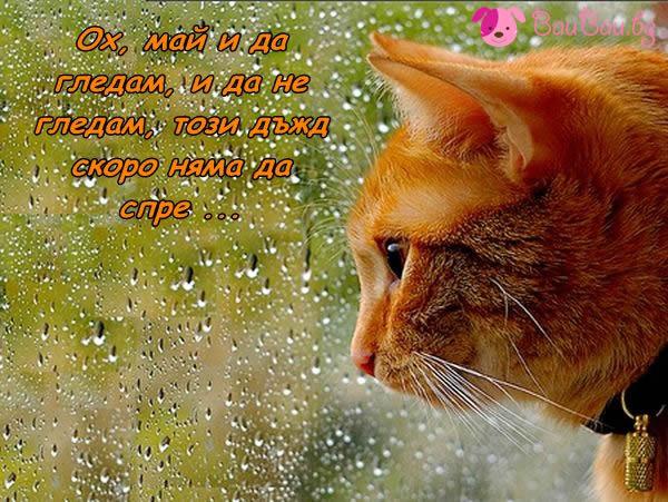 Дъждовно очакване