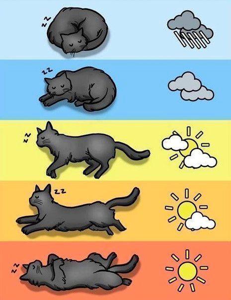 Котешка прогноза за времето