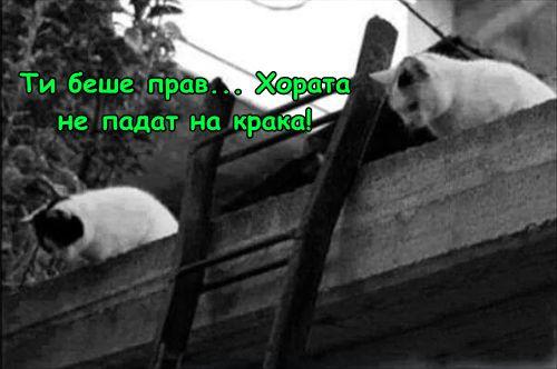 Котешки експеримент