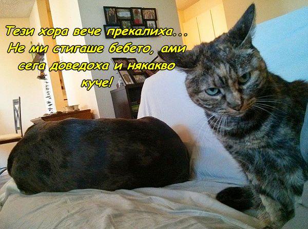 Котешко гостоприемство