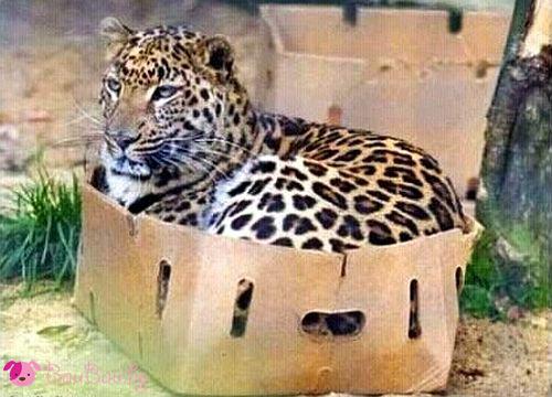 Котката си е котка ... дори и в Африка