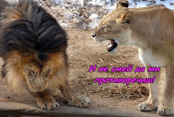 Всеки крал си има кралица ...