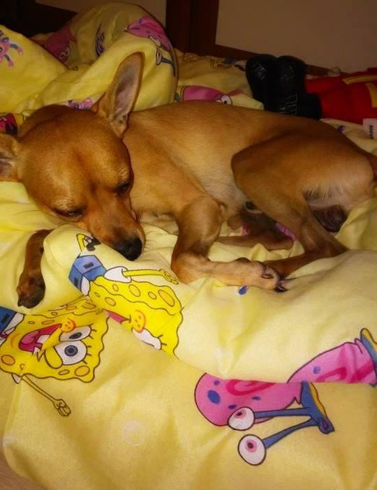 Лека нощ от Чарли и Спондж Боб