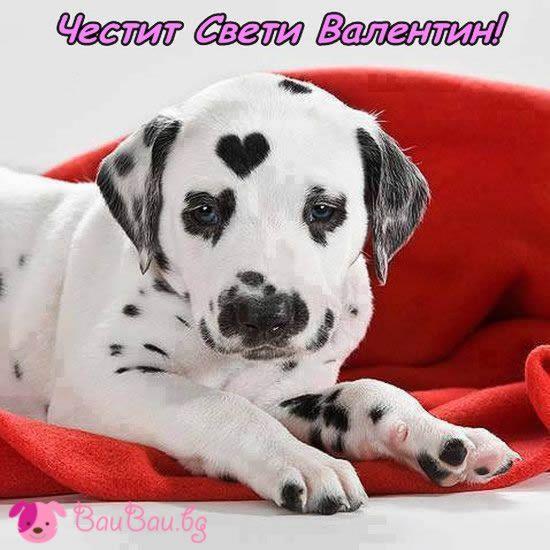 Кученце на Свети Валентин
