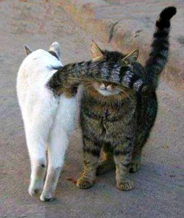 Любовта е сляпа ♥