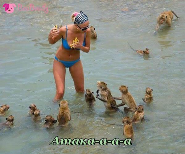 Маймунска атака