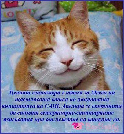 Септември - Месец на щастливата котка