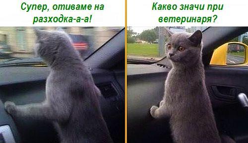 На разходка с котка