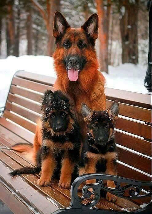 Три прелести