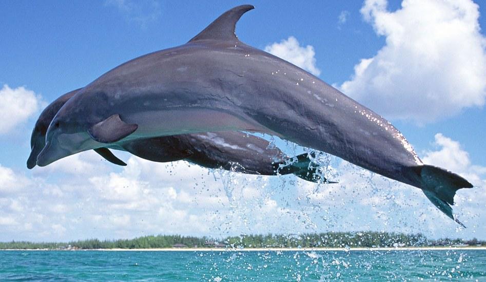 Делфин знакомства лесби новосибирска intitle posts