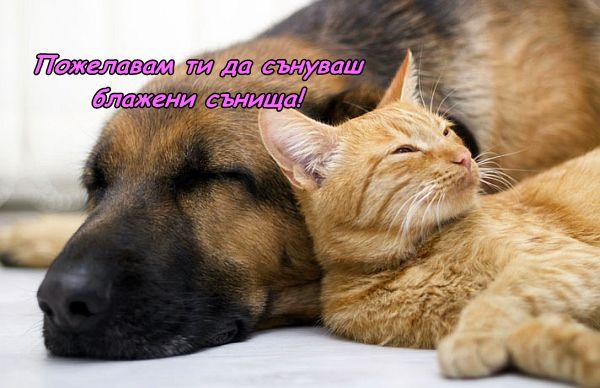 Пожелание за Лека нощ