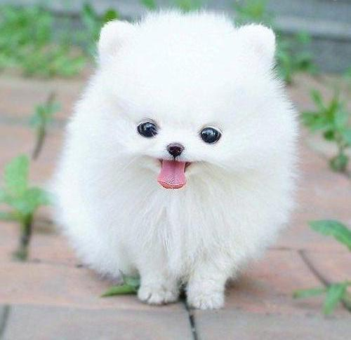 Бяло пухче :)