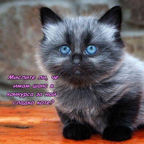 Претендент в конкурса за сладки котенца