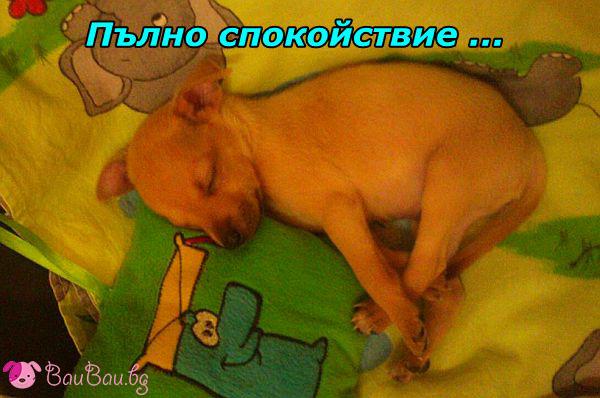 Малкият Чарли в света на сънищата