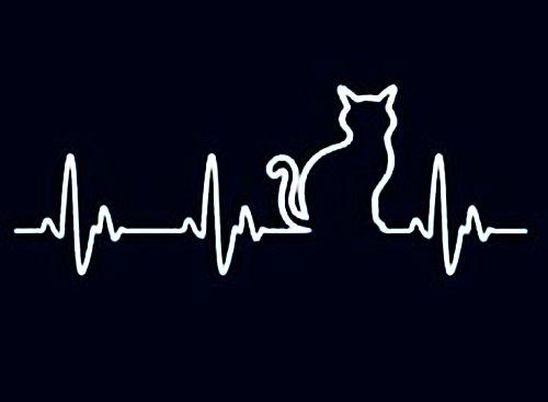 Пулсът на моето сърце!