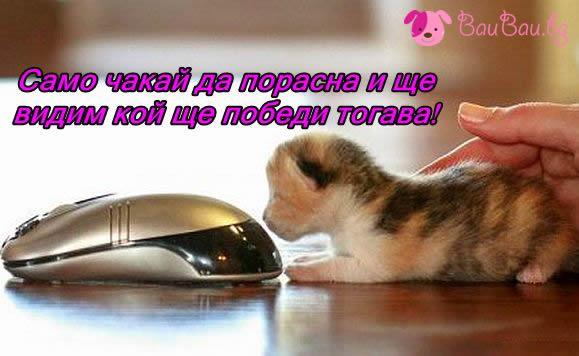 Котка и мишка?!
