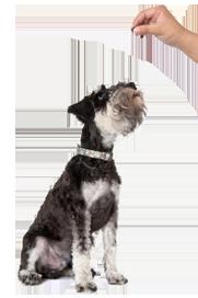 Лакомство 8 in 1 Training Pro Energy 100g для собак 126591