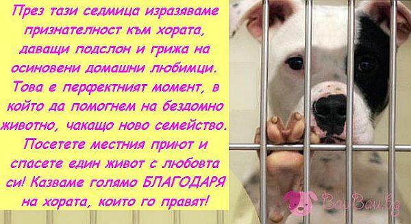 1 - 7 Ноември - Седмица на признателност към осиновителите и спасителите на животни