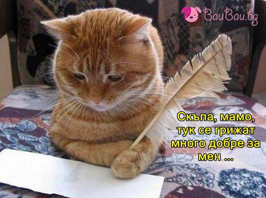 Писмо до мама