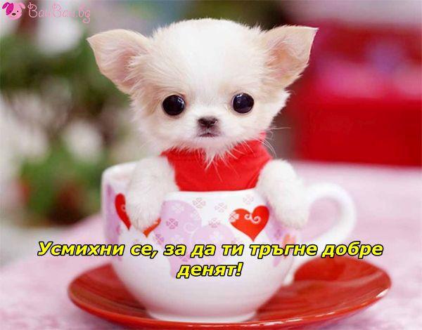 Сладко кафе без захар