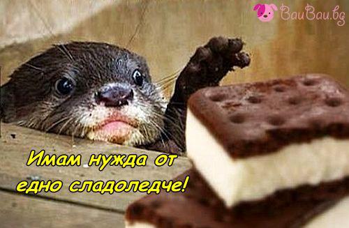 Сладоледче-е-е!