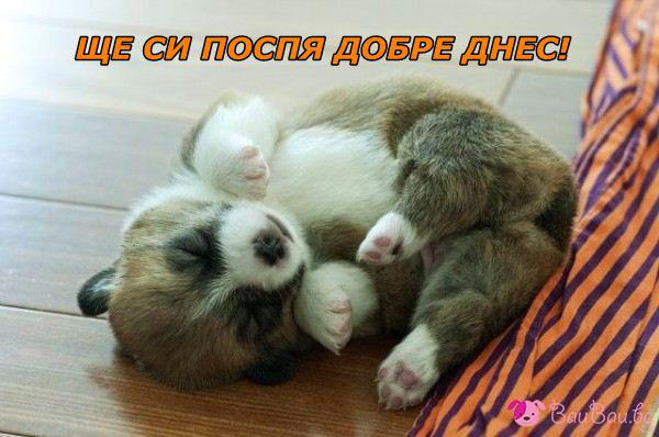 Блажен сън