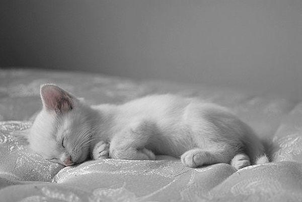 Спящ бял ангел