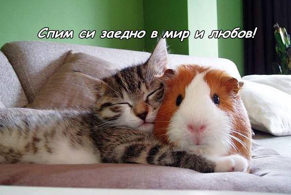 Сън в мир и любов