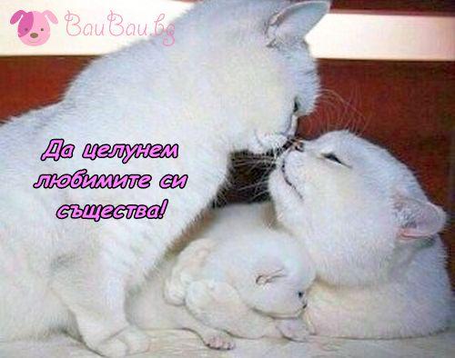 Световен ден на целувката