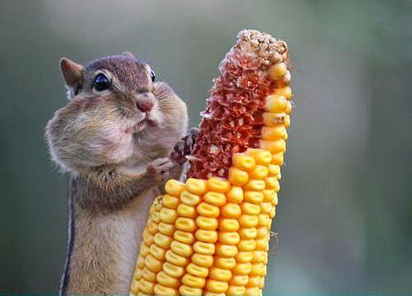 То-о-о-опла прясна царевица-а-а-а!