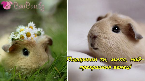 Венец от цветя за моята любима