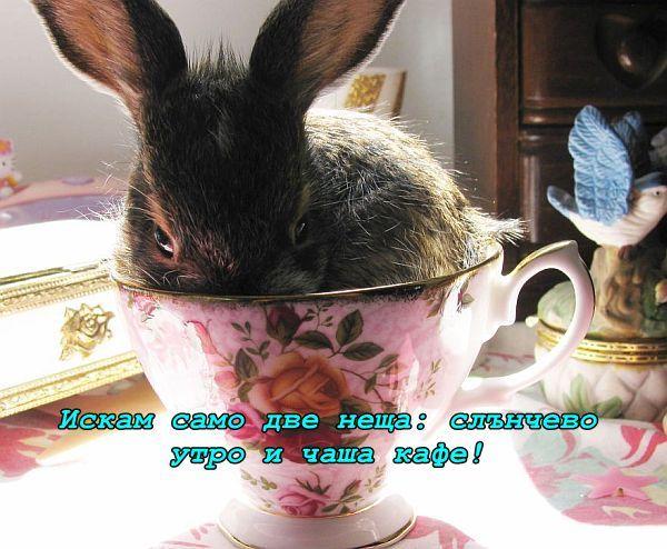 Чаша кафе в слънчево утро