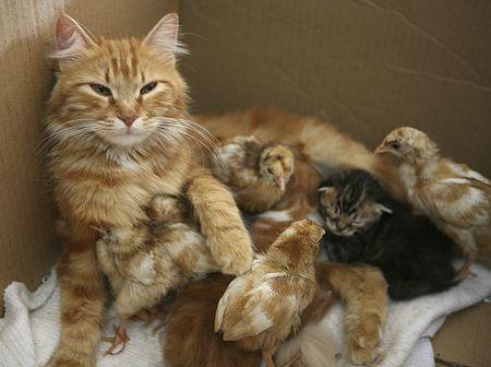 Една добра Майка