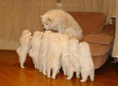 Добри майки ли са кучетата?