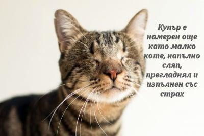 Фотограф заснема слепи котки, за да им помогне да бъдат осиновени