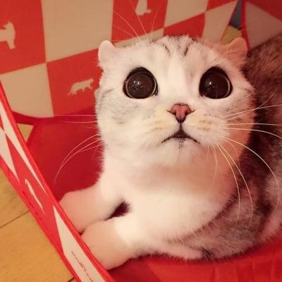 Запознайте се с Хана - котето с големи красиви очи, което взриви Instagram